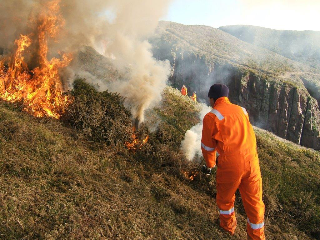 Controlled burning on the coast to boost biodiversity