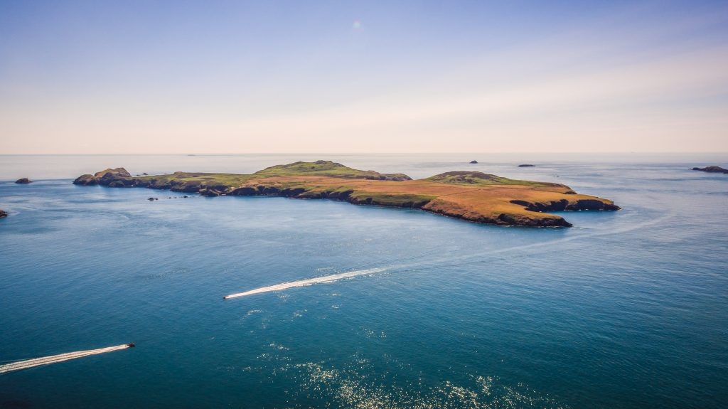 Ramsey Island in the Pembrokeshire Coast National Park, Wales, UK