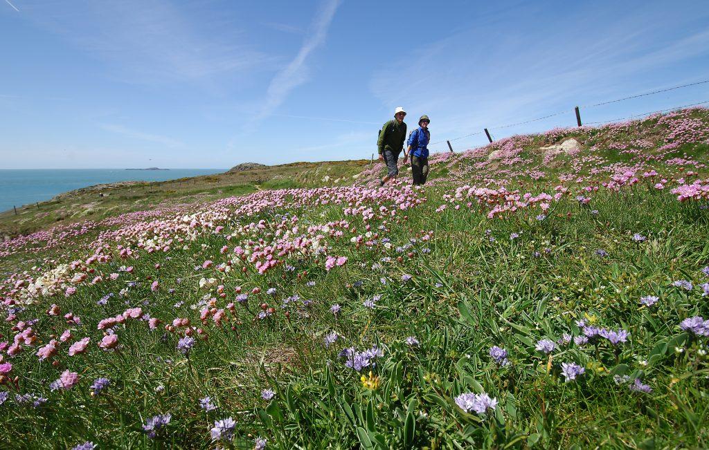 Walkers on St David's Head, Pembrokeshire Coast National Park, Wales, UK