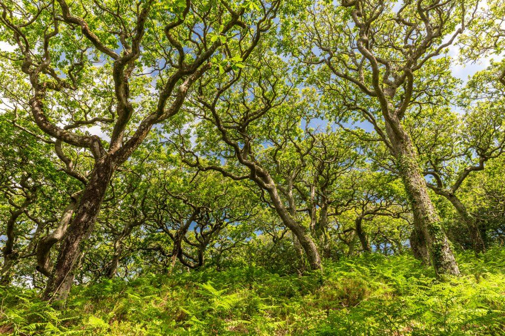 Lawrenny Woods, Daugleddau Estuary