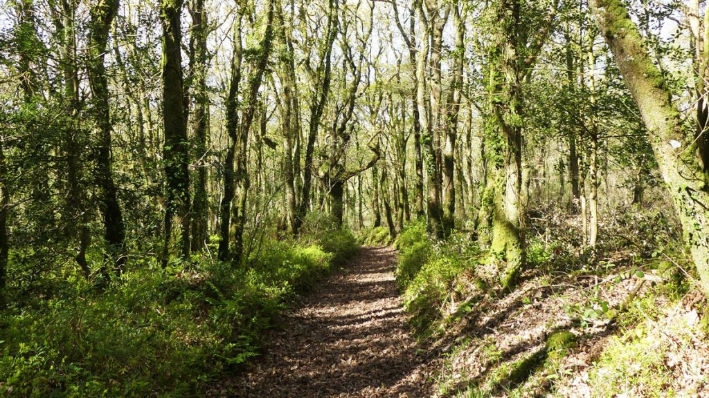 Pengelli Woods path