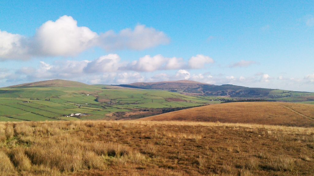 Rosebush from Mynydd Castlebythe