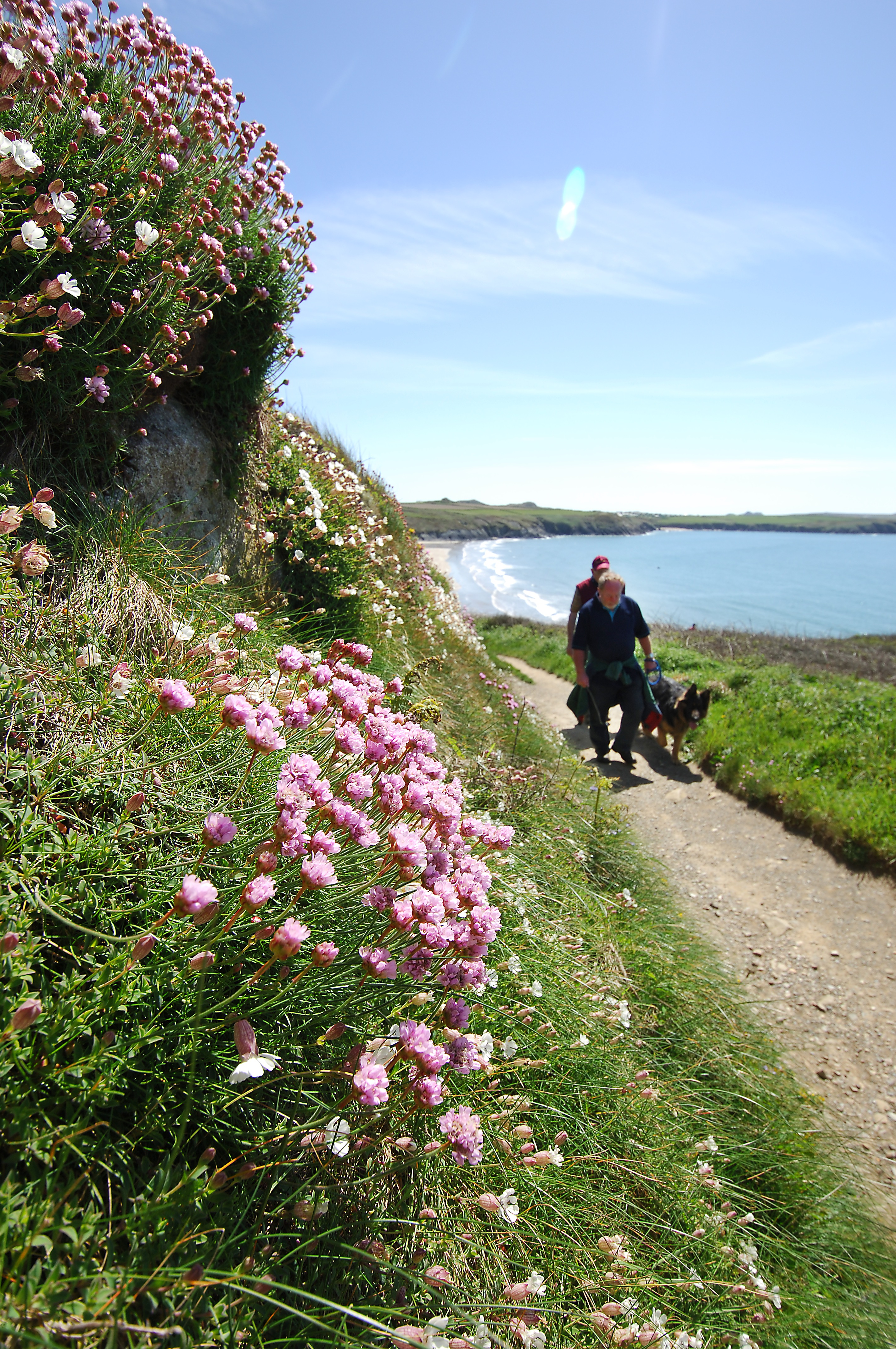 Dog walkers on the Pembrokeshire Coast Path National Trail near Whitesands