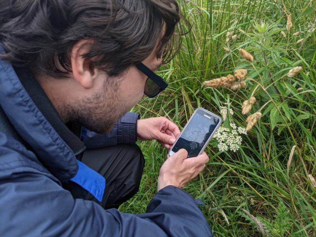 Male using smartphone to identify wildflowers
